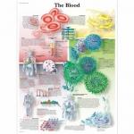 3B Scientific VR1379L, Laminated Blood Chart, English