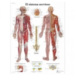 3B Scientific VR3620L, Laminated Nervous System Chart, Spanish