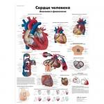 3B Scientific VR6334L, Laminated Anatomy Human Heart Chart, Russian