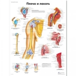 "3B Scientific VR6170UU, Chart ""Shoulder and Elbow"" Russian, Paper"