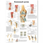 "3B Scientific VR6174UU, Chart ""The Knee Joint"" Russian Language, Paper"